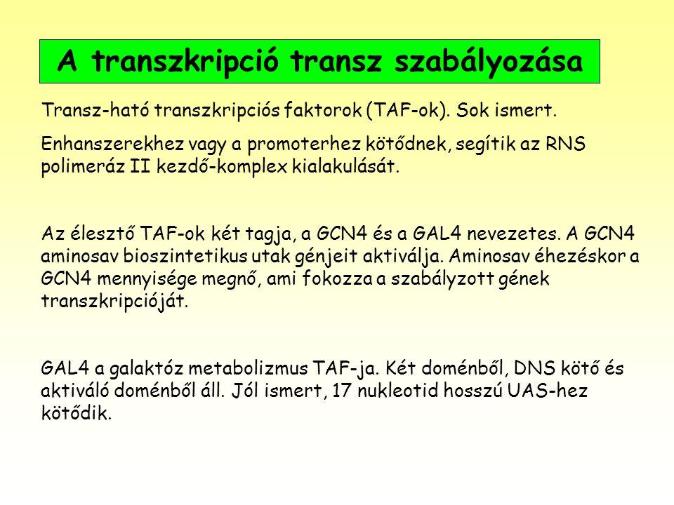 A transzkripció transz szabályozása Transz-ható transzkripciós faktorok (TAF-ok). Sok ismert. Enhanszerekhez vagy a promoterhez kötődnek, segítik az R
