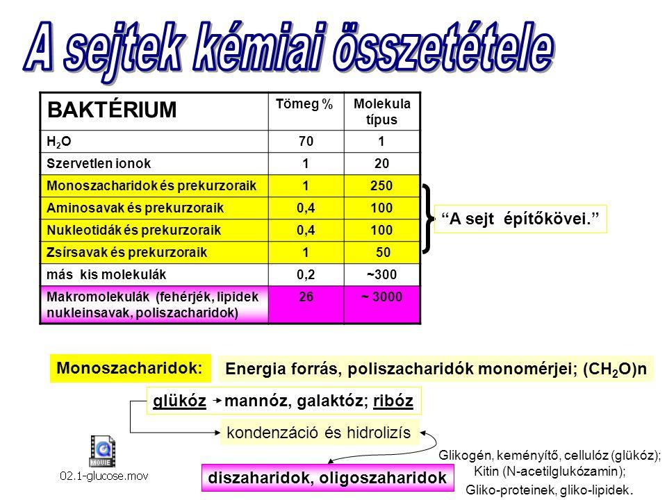 Zsírsavak Sejtmembránok alkotói; tartalék tápanyag és energiaforrás Palmitinsav, sztearinsav : telített CH-ek Amfipatikus = hidrofil + hidrofób hidrofil, COOH; vízes közegben ionozálódik: COO - hidrofób Oleinsav : telítetlen CH-ek glicerol O H C szilárd folyékony membrán - fluiditás Triacilglicerol hidrofób glicerol P hidrofil hidrofób foszfolipidek glikolipidek hidrofil csoport
