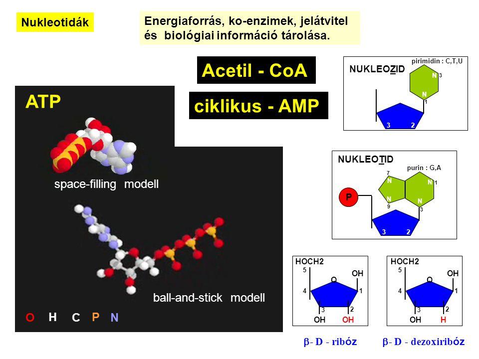 Nukleotidák Energiaforrás, ko-enzimek, jelátvitel és biológiai információ tárolása.