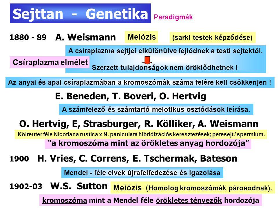 Kromoszóma térkép 1913 1916 A gének kromoszómális lokalozációja.
