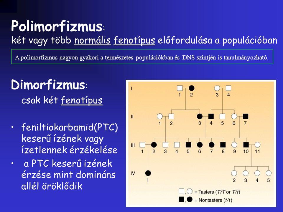 Dimorfizmus : csak két fenotípus fen i ltiokarbamid(PTC) keserű ízének vagy ízetlennek érzékelése a PTC keserű izének érzése mint domináns allél öröklődik Polimorfizmus : két vagy több normális fenotípus előfordulása a populációban A polimorfizmus nagyon gyakori a természetes populációkban és DNS szintjén is tanulmányozható.