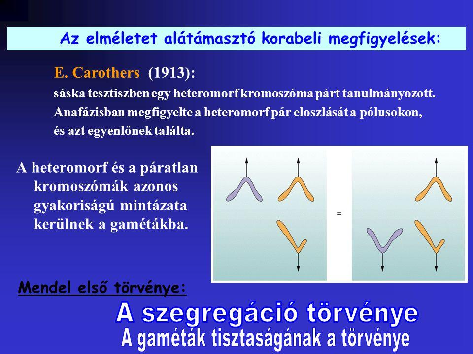 A heteromorf és a páratlan kromoszómák azonos gyakoriságú mintázata kerülnek a gamétákba.