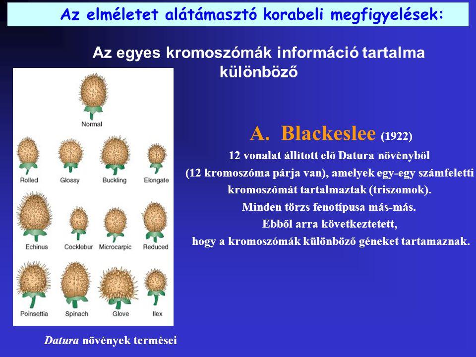 Az egyes kromoszómák információ tartalma különböző Az elméletet alátámasztó korabeli megfigyelések: A.