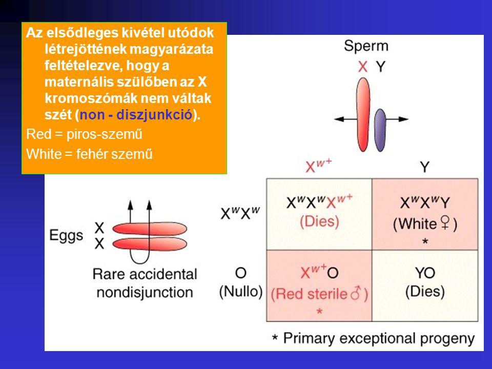 Az elsődleges kivétel utódok létrejöttének magyarázata feltételezve, hogy a maternális szülőben az X kromoszómák nem váltak szét (non - diszjunkció).