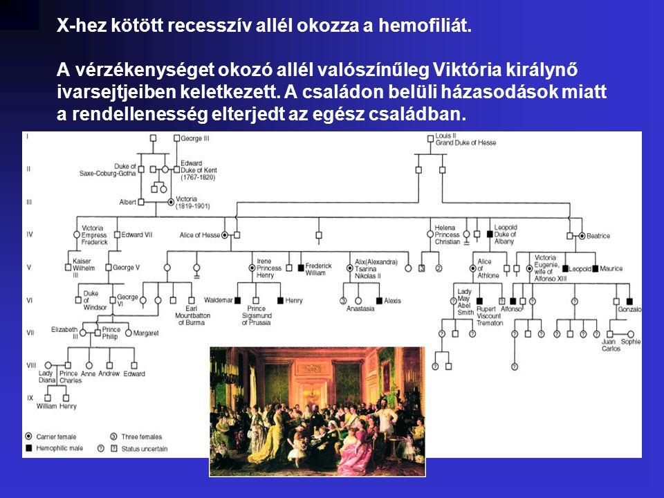 X-hez kötött recesszív allél okozza a hemofiliát.