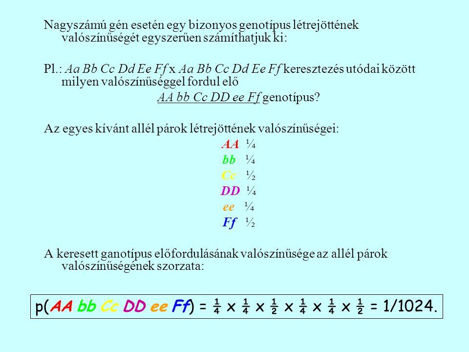 Nagyszámú gén esetén egy bizonyos genotípus létrejöttének valószínűségét egyszerűen számíthatjuk ki: Pl.: Aa Bb Cc Dd Ee Ff x Aa Bb Cc Dd Ee Ff keresztezés utódai között milyen valószínűséggel fordul elő AA bb Cc DD ee Ff genotípus.