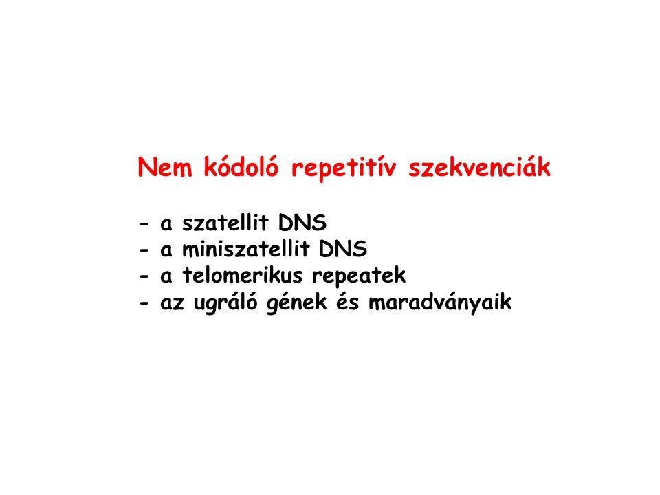 Nem kódoló repetitív szekvenciák - a szatellit DNS - a miniszatellit DNS - a telomerikus repeatek - az ugráló gének és maradványaik