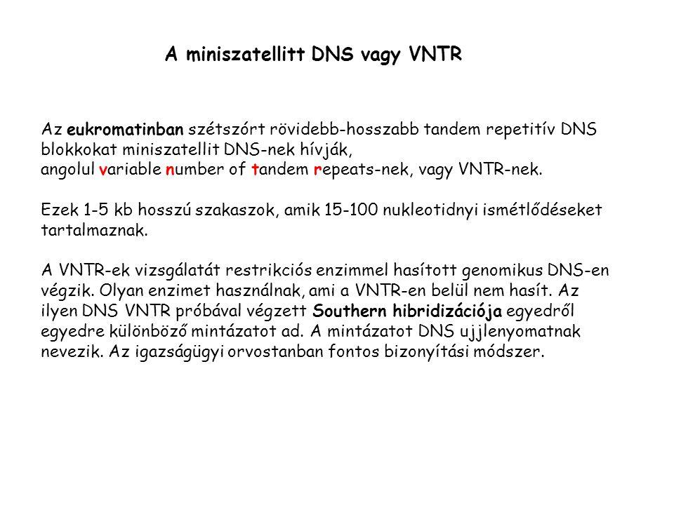 A miniszatellitt DNS vagy VNTR Az eukromatinban szétszórt rövidebb-hosszabb tandem repetitív DNS blokkokat miniszatellit DNS-nek hívják, angolul variable number of tandem repeats-nek, vagy VNTR-nek.