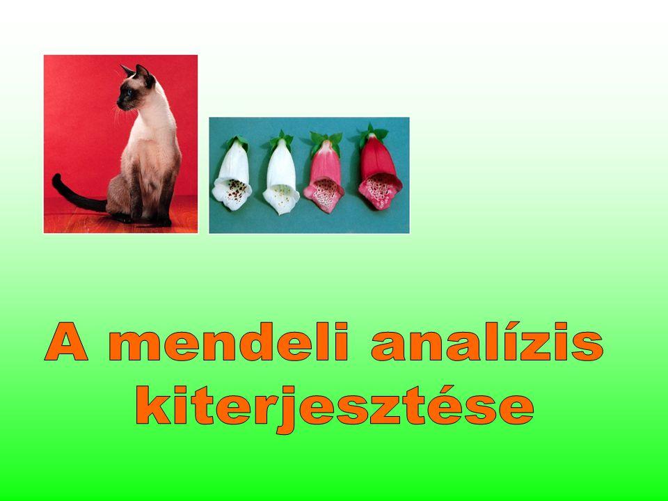 Bebizonyosodott, hogy Mendel törvényei érvényesek minden eukarióta organizmusra.