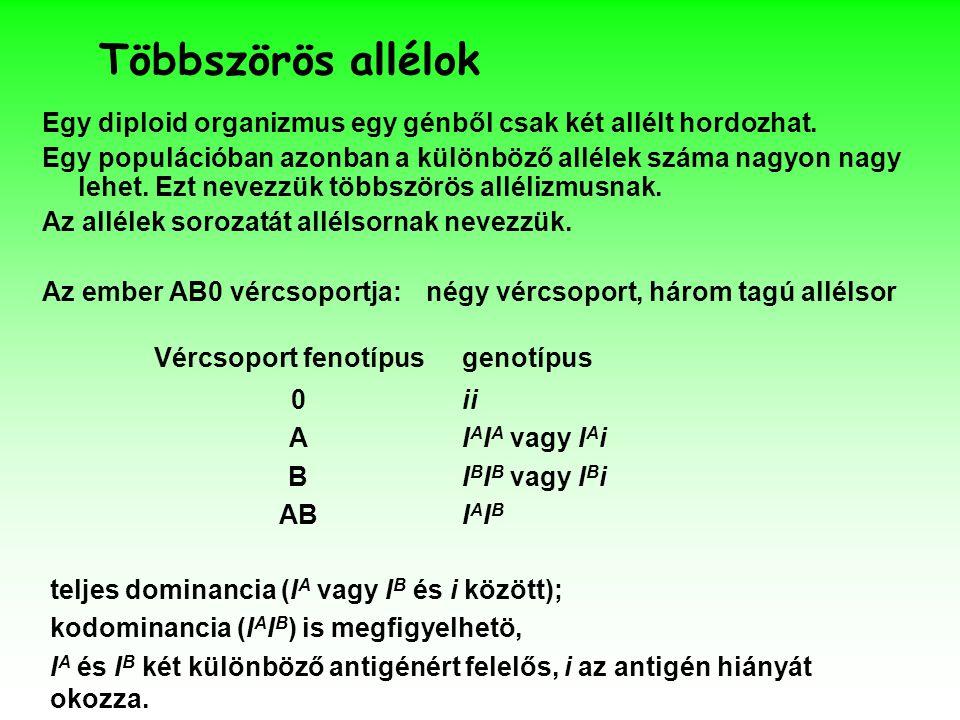 Többszörös allélok Egy diploid organizmus egy génből csak két allélt hordozhat.
