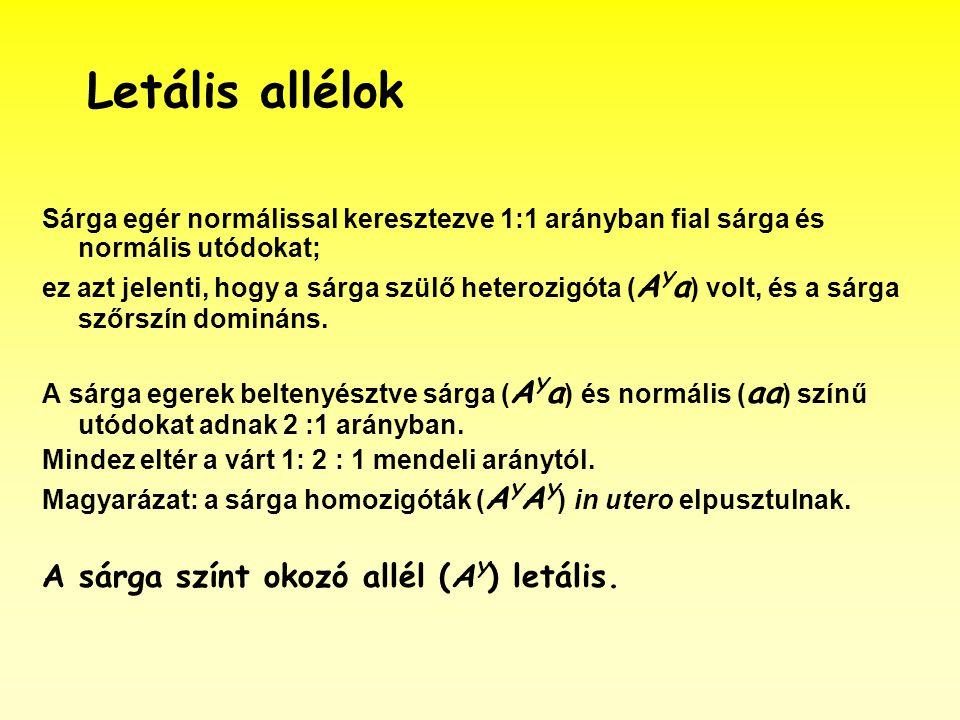 Letális allélok Sárga egér normálissal keresztezve 1:1 arányban fial sárga és normális utódokat; ez azt jelenti, hogy a sárga szülő heterozigóta ( A Y a ) volt, és a sárga szőrszín domináns.