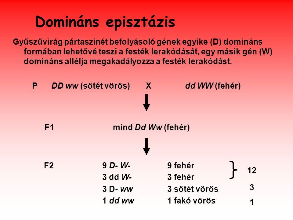 Domináns episztázis Gyűszűvirág pártaszinét befolyásoló gének egyike (D) domináns formában lehetővé teszi a festék lerakódását, egy másik gén (W) domináns allélja megakadályozza a festék lerakódást.