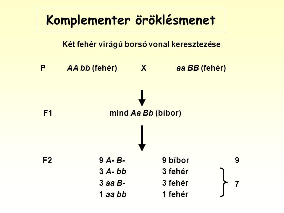 Komplementer öröklésmenet PAA bb (fehér)Xaa BB (fehér) F29 A- B- 3 A- bb 3 aa B- 1 aa bb 9 bíbor 3 fehér 1 fehér 9 F1mind Aa Bb (bíbor) 7 Két fehér virágú borsó vonal keresztezése