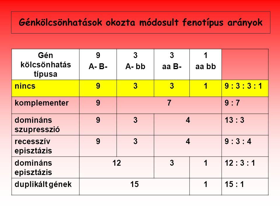 Génkölcsönhatások okozta módosult fenotípus arányok Gén kölcsönhatás típusa 9 A- B- 3 A- bb 3 aa B- 1 aa bb nincs93319 : 3 : 3 : 1 komplementer979 : 7 domináns szupresszió 93413 : 3 recesszív episztázis 9349 : 3 : 4 domináns episztázis 123112 : 3 : 1 duplikált gének15115 : 1