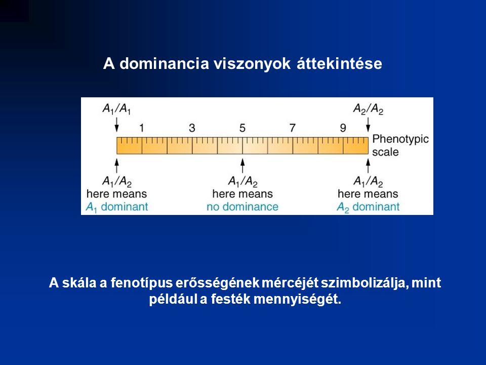 A gén allélei, aguti sorozat A- aguti a- nem aguti A y - sárga B gén alléljai, fekete sorozat B- fekete b- barna C gén alléljai - albinó sorozat C- intenzív szín c ch - csincsilla c h - himalája cc- albínó S gén allélei - foltosság S- egyszínű ss- foltos, tarka D gén allélei - halványító sorozat D- teljes szín dd- fakó, tipikus módosító gén
