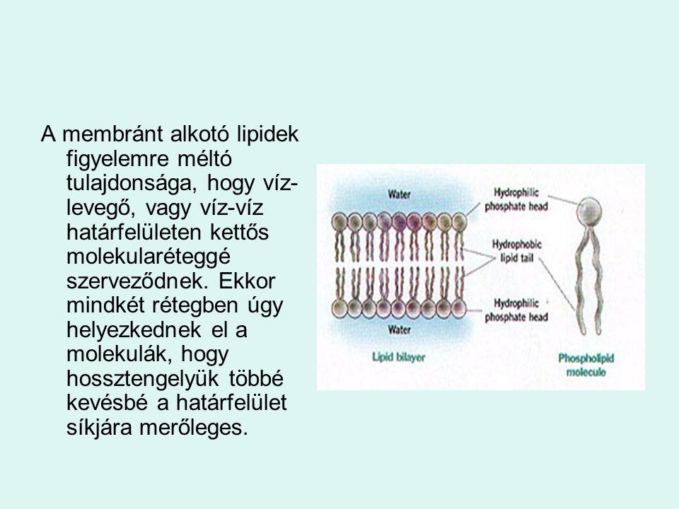 A membránt alkotó lipidek figyelemre méltó tulajdonsága, hogy víz- levegő, vagy víz-víz határfelületen kettős molekularéteggé szerveződnek. Ekkor mind