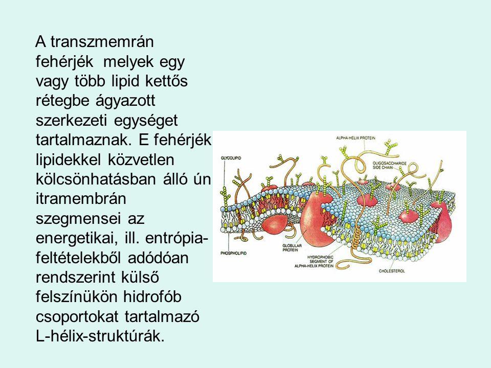 A transzmemrán fehérjék melyek egy vagy több lipid kettős rétegbe ágyazott szerkezeti egységet tartalmaznak. E fehérjék lipidekkel közvetlen kölcsönha