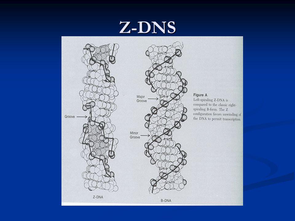 Z-DNS