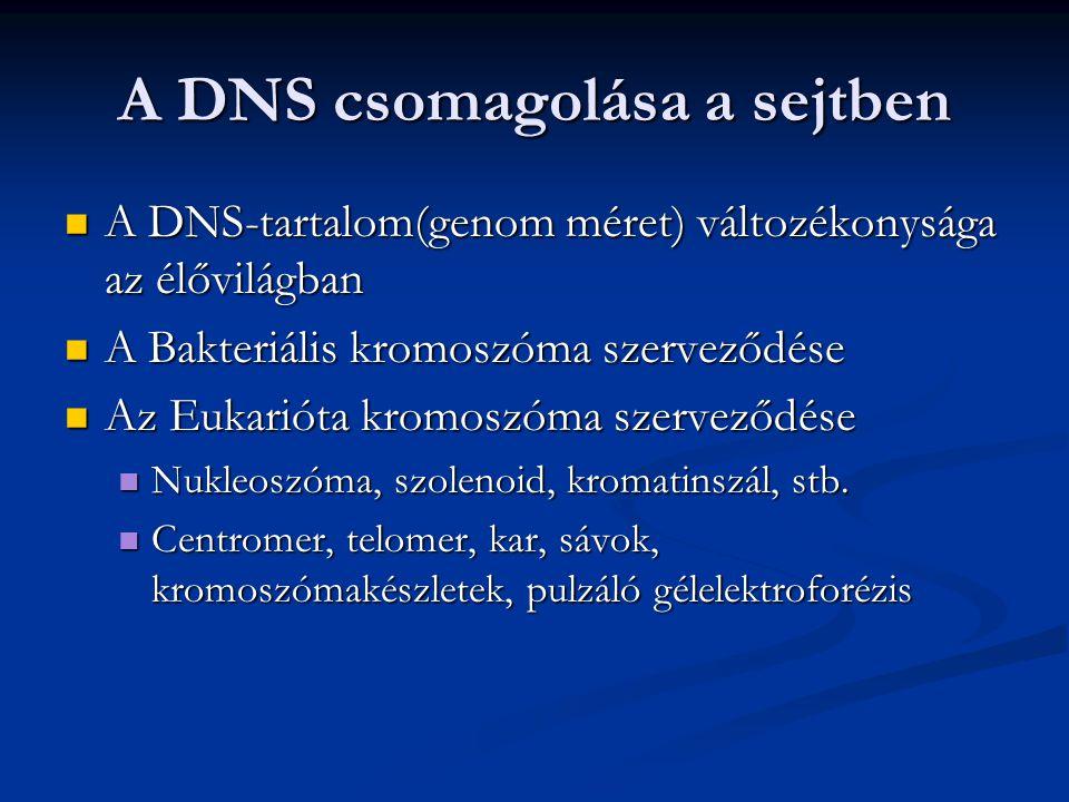 A DNS csomagolása a sejtben A DNS-tartalom(genom méret) változékonysága az élővilágban A DNS-tartalom(genom méret) változékonysága az élővilágban A Ba
