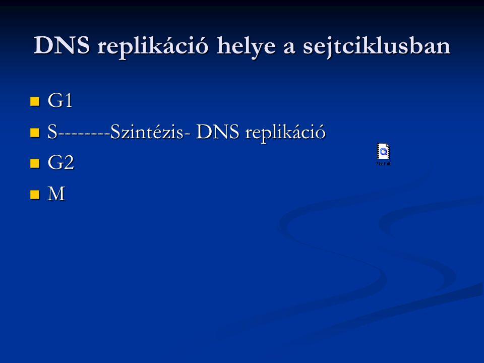 DNS replikáció helye a sejtciklusban G1 G1 S--------Szintézis- DNS replikáció S--------Szintézis- DNS replikáció G2 G2 M