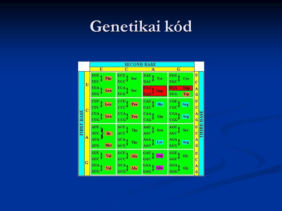 Genetikai kód