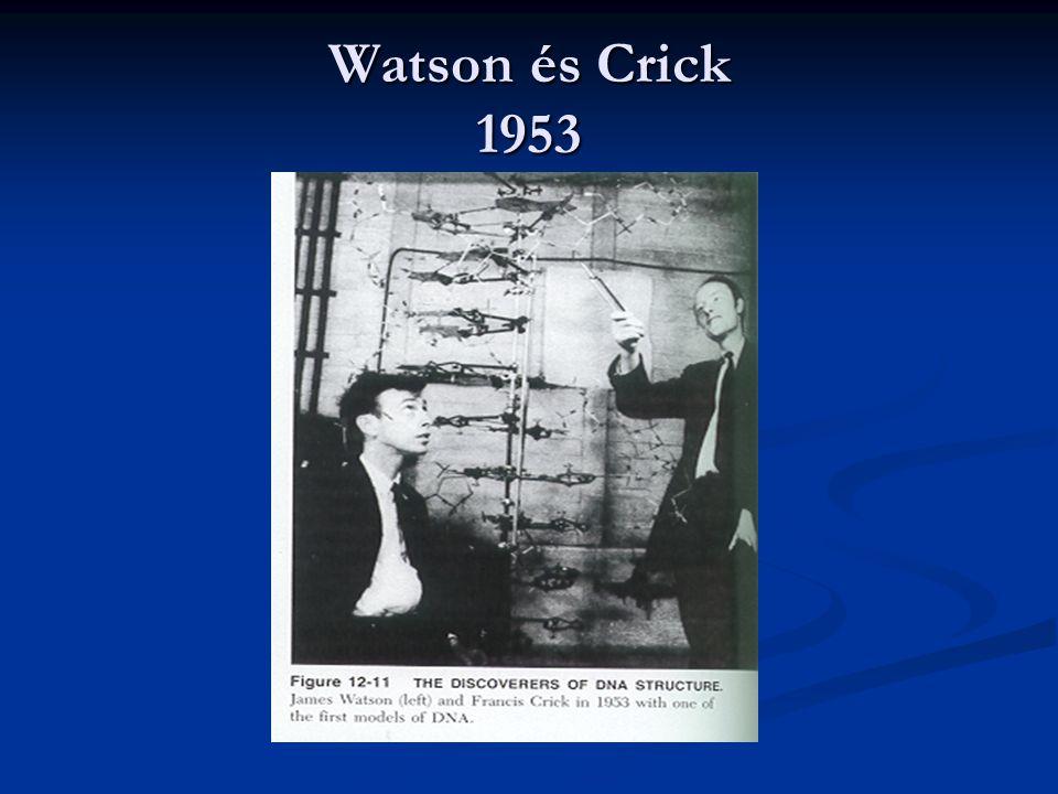 Watson és Crick 1953