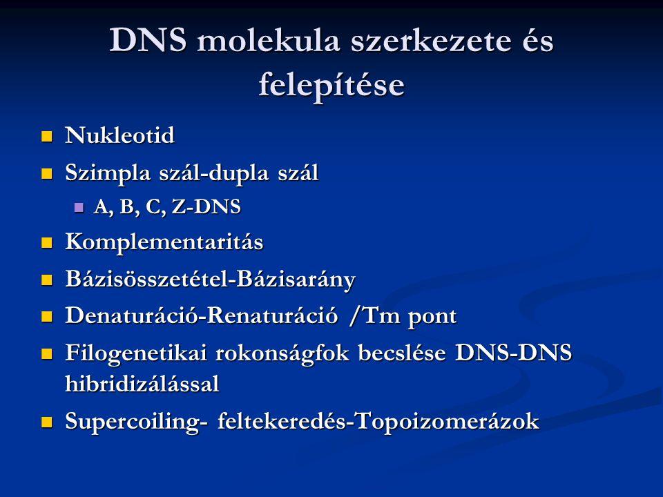 DNS molekula szerkezete és felepítése Nukleotid Nukleotid Szimpla szál-dupla szál Szimpla szál-dupla szál A, B, C, Z-DNS A, B, C, Z-DNS Komplementarit