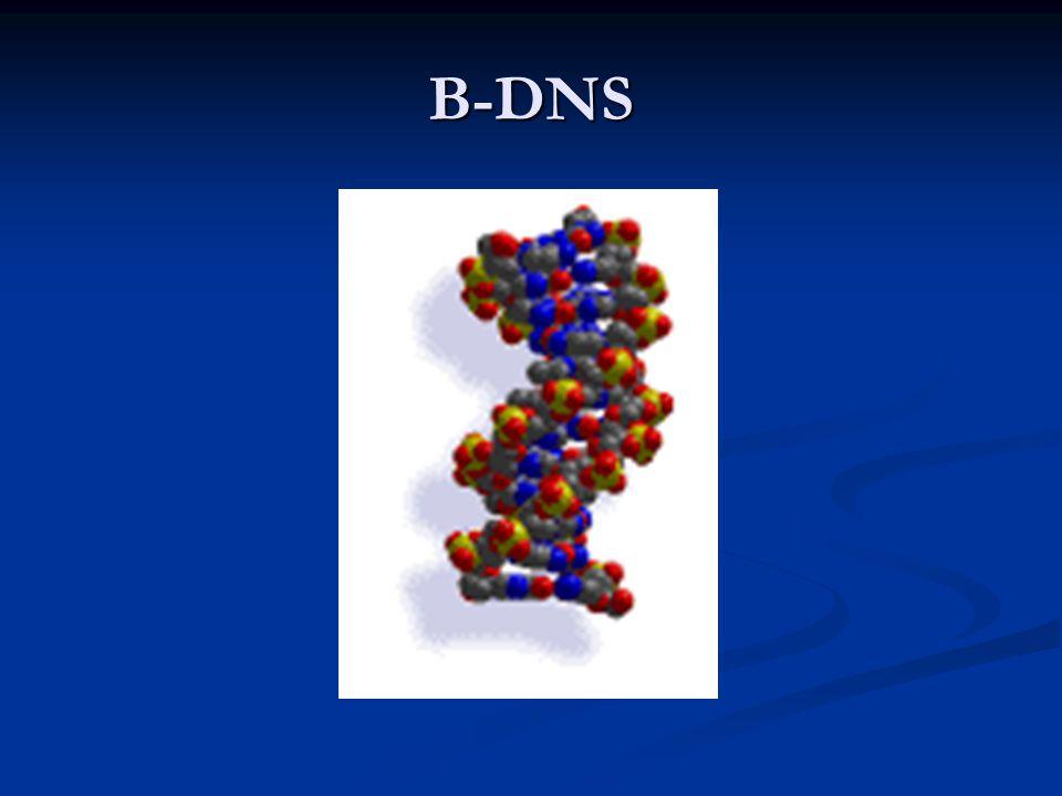 B-DNS