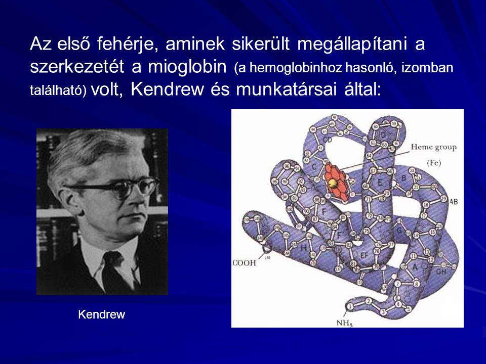 Az első fehérje, aminek sikerült megállapítani a szerkezetét a mioglobin (a hemoglobinhoz hasonló, izomban található) volt, Kendrew és munkatársai által: Kendrew