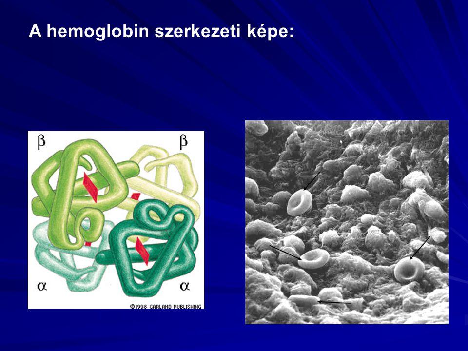 A hemoglobin szerkezeti képe: