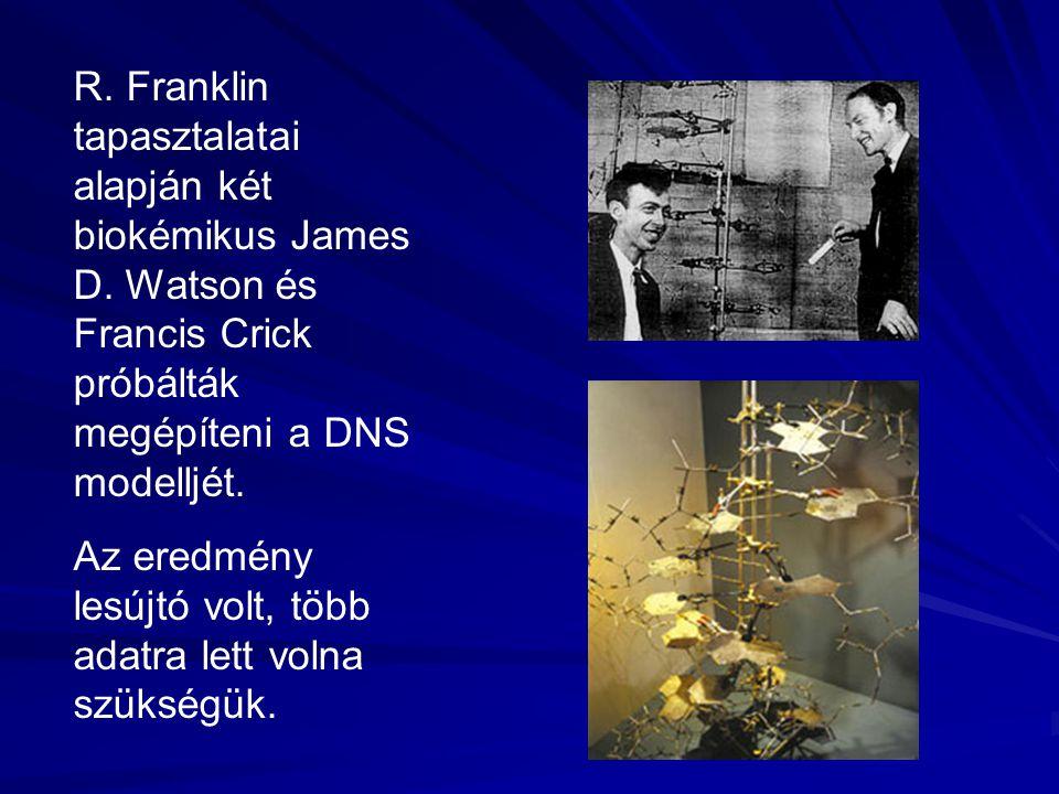 R.Franklin tapasztalatai alapján két biokémikus James D.