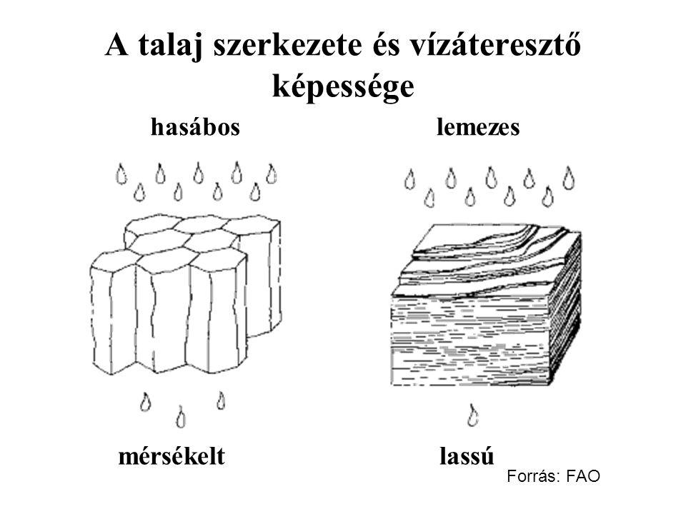 A talaj szerkezete és vízáteresztő képessége hasáboslemezes mérsékeltlassú Forrás: FAO