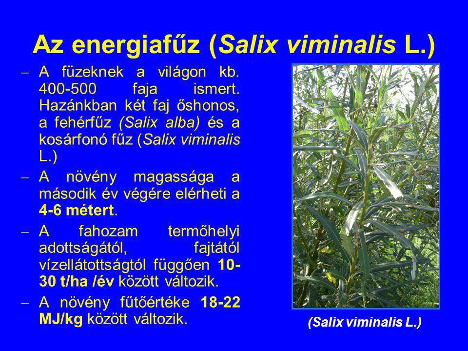 Az energiafűz (Salix viminalis L.) – A füzeknek a világon kb. 400-500 faja ismert. Hazánkban két faj őshonos, a fehérfűz (Salix alba) és a kosárfonó f