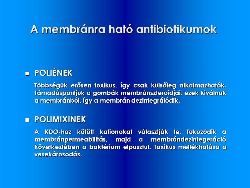 A membránra ható antibiotikumok POLIÉNEK POLIÉNEK Többségük erősen toxikus, így csak külsőleg alkalmazhatók. Támadáspontjuk a gombák membránszteroidja