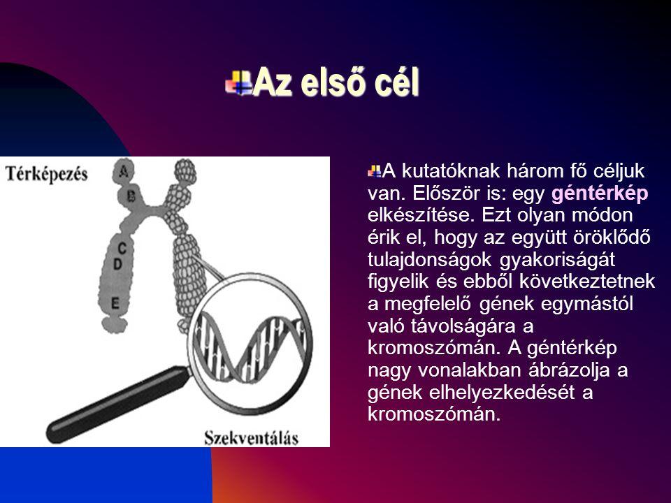 A Human Genom Project célja Ennek a nagy nemzetközi programnak végső célja, hogy az emberi kromoszómákon levő kb. 100.000 gén pontos helyzetét meghatá
