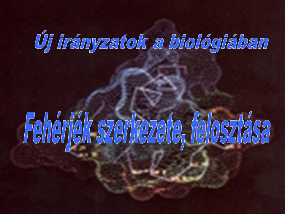  A globuláris fehérjék látszólag rendezetlen, gombolyagszerű szerkezetükről kapták nevüket.