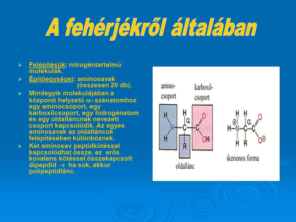   Felépítésük: nitrogéntartalmú molekulák.   Építőegységei: aminosavak (összesen 20 db).   Mindegyik molekulájában a központi helyzetű  - széna
