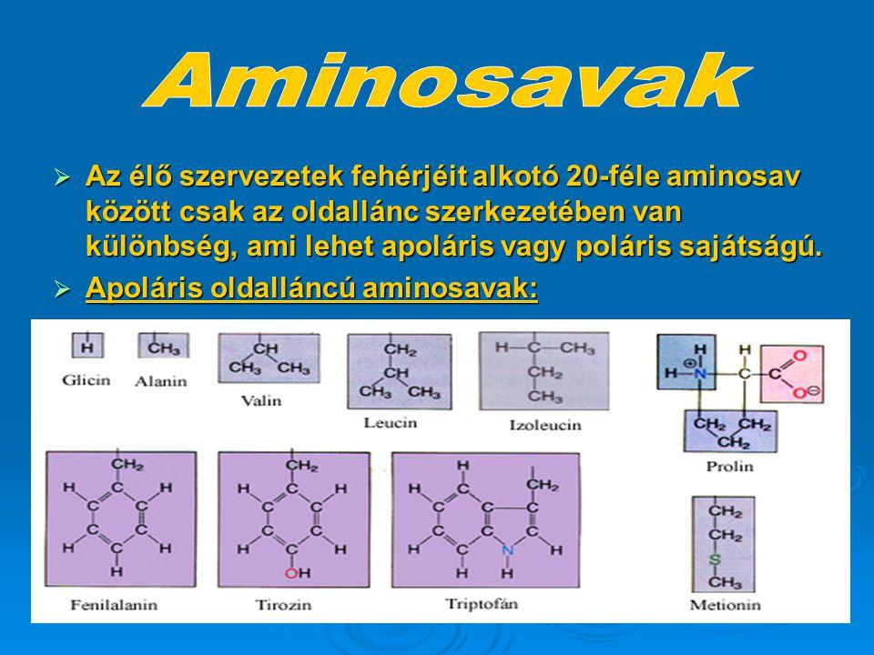  Az élő szervezetek fehérjéit alkotó 20-féle aminosav között csak az oldallánc szerkezetében van különbség, ami lehet apoláris vagy poláris sajátságú
