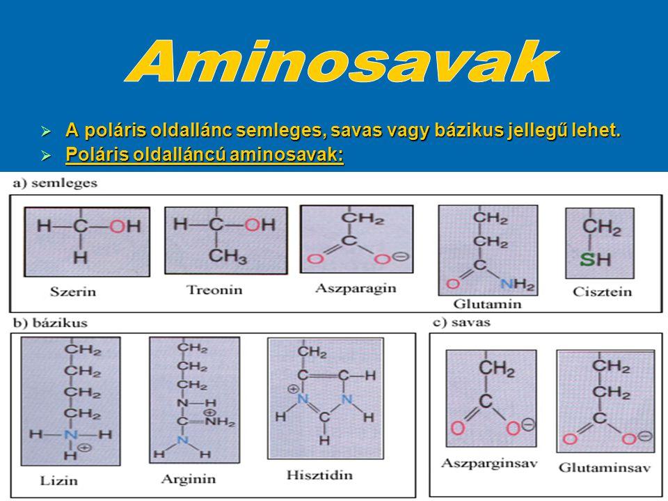  Az aminosavak kapcsolódási sorrendjét a fehérjék elsődleges szerkezetének nevezzük.