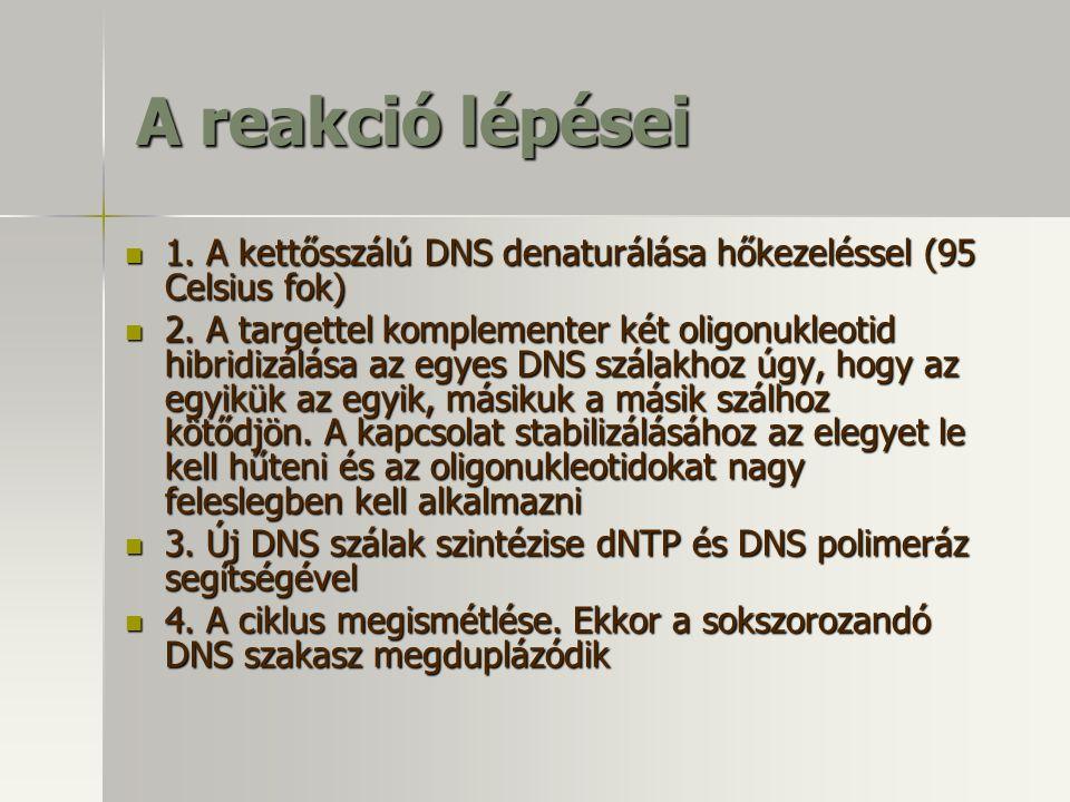 A reakció lépései 1. A kettősszálú DNS denaturálása hőkezeléssel (95 Celsius fok) 1. A kettősszálú DNS denaturálása hőkezeléssel (95 Celsius fok) 2. A