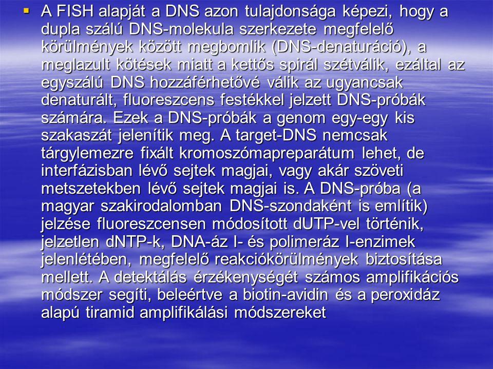  A FISH alapját a DNS azon tulajdonsága képezi, hogy a dupla szálú DNS-molekula szerkezete megfelelő körülmények között megbomlik (DNS-denaturáció),