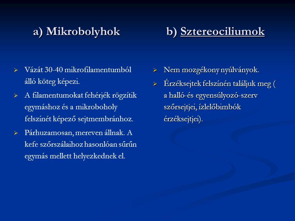 a) Mikrobolyhok b) Sztereociliumok   Vázát 30-40 mikrofilamentumból álló köteg képezi.   A filamentumokat fehérjék rögzítik egymáshoz és a mikrobo