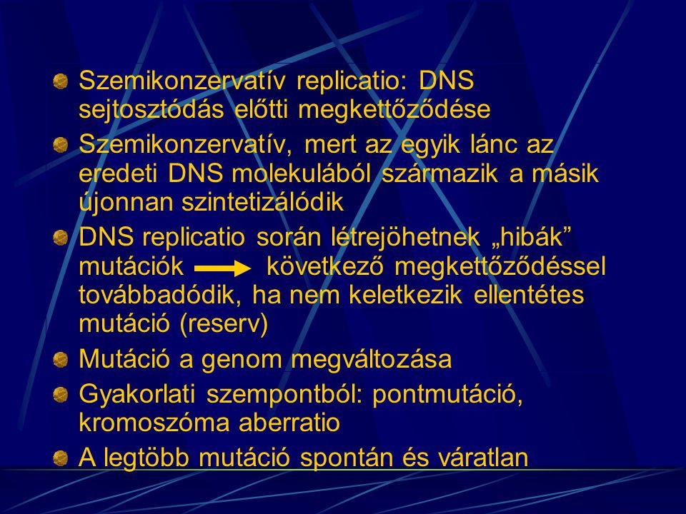 DNS-molekula szemikonzervatív replicatioja