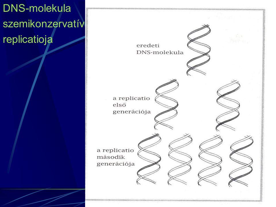 Benignus polimorfizmus A kimutatott mutációnak 'nincs' klinikai relevanciája Genetikai értelemben akkor használjuk, amikor olyan mutációt takar, amelyek genetikailag még nem mutathatók ki azon egyéneknél akiknél a klinikai relevanciák megtalálhatók Kockázati mutáció A betegség kialakulását nem okozza, de a betegség kialakulásához hozzájárul a jelenléte