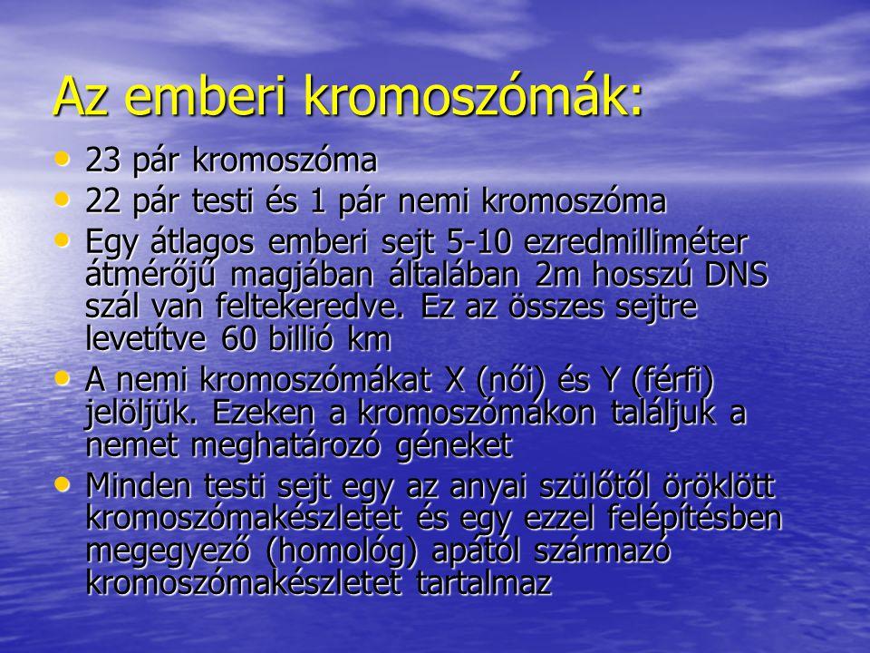 Az emberi kromoszómák: 23 pár kromoszóma 23 pár kromoszóma 22 pár testi és 1 pár nemi kromoszóma 22 pár testi és 1 pár nemi kromoszóma Egy átlagos emberi sejt 5-10 ezredmilliméter átmérőjű magjában általában 2m hosszú DNS szál van feltekeredve.