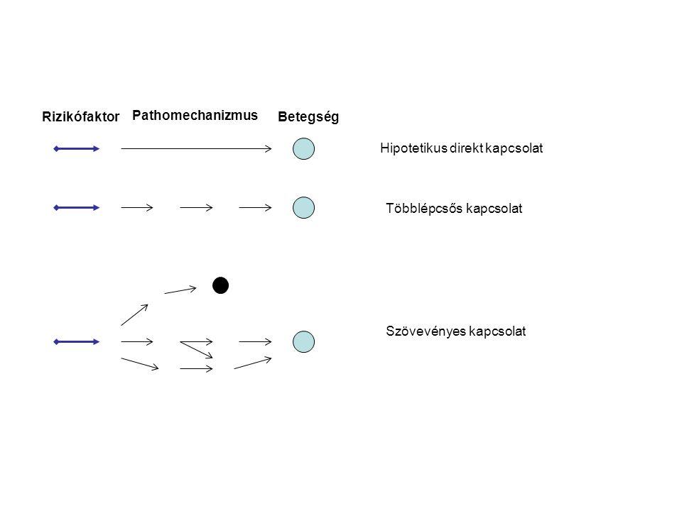 Rizikófaktor Pathomechanizmus Betegség Hipotetikus direkt kapcsolat Többlépcsős kapcsolat Szövevényes kapcsolat