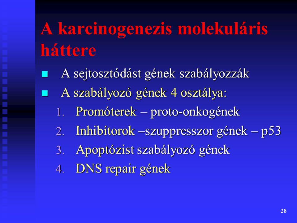 29 szuppresszor gének sérülése/elvesztése szuppresszor gének sérülése/elvesztése proto-onkogének amplifikációja proto-onkogének amplifikációja apoptózis gének sérülése/elvesztése apoptózis gének sérülése/elvesztése DNS repair gének sérülése/elvesztése DNS repair gének sérülése/elvesztése A karcinogenezis központjában nem-letális genetikai hibák állnak