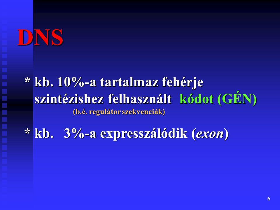 7 Génexpresszió Courtesy The Protein Society