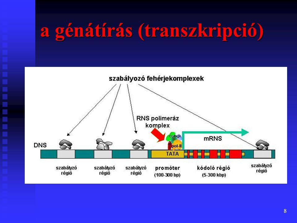 9 Mutációk a DNS szerkezetében létrejövő eltérések