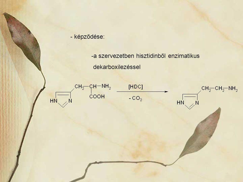 - képződése: -a szervezetben hisztidinből enzimatikus dekarboxilezéssel